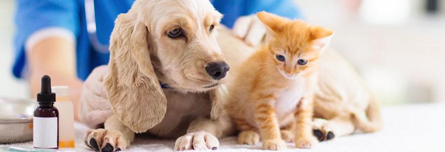 Argos vétérinaire
